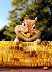 Squirrel with Corn Teeth
