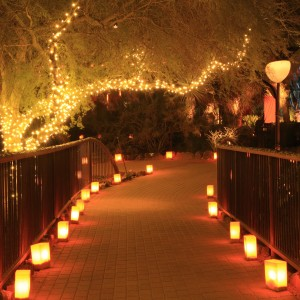 Luminaries-Christmas-Lights-1200x1201-300x300